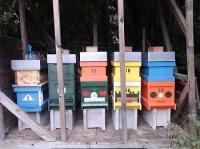 Honigbienen Invest. 27Kg Destination Weinviertler Honig mit Akazienhonig und Blütenhonig Gutschein