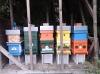 Honigbienen Invest. 27Kg Destination Bisamberg Honig Akazien- und Blütenhonig Gutschein